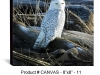 canvas-8x8-11-snowy-OWL