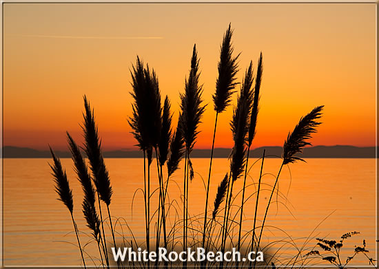 https://whiterockbeach.ca/wp-content/uploads/2011/12/white-rock-051.jpg
