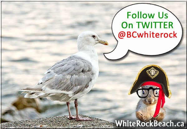 Follow us on TWITTER @BCwhiterock