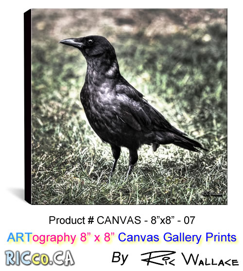canvas-8x8-07-crow-edgar