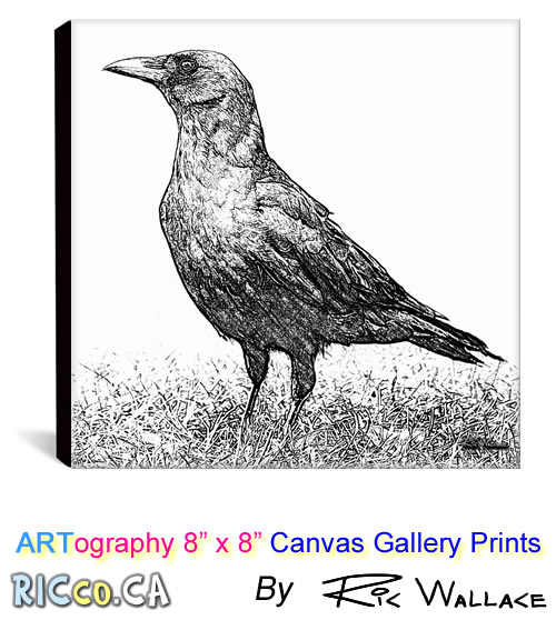 canvas-8x8-10-crow-edgar
